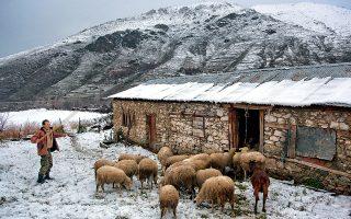 Οι κτηνοτρόφοι προστατεύουν τα κοπάδια τους από το κρύο στις πετρόχτιστες στάνες. (Φωτογραφία: ΠΕΡΙΚΛΗΣ ΜΕΡΑΚΟΣ)