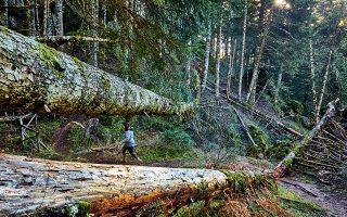 Τα μονοπάτια της Ανω Αγόριανης, μέσα στο δάσος, προσφέρονται για πεζοπορία. (Φωτογραφία: ΓΙΩΡΓΟΣ ΤΣΑΦΟΣ)