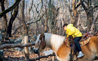 Ιππασία για μικρούς και μεγάλους ανάμεσα στα δέντρα.( Φωτογραφία: ΔΗΜΗΤΡΗΣ ΒΛΑΪΚΟΣ)