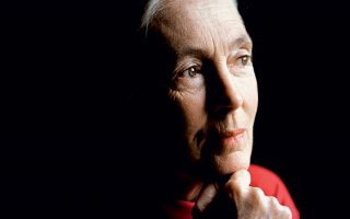 i-jane-goodall-sto-k-never-give-up0