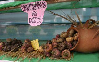 Μάκα, ο βολβός από το Περού, δυναμωτικός, βιταμινούχος, αφροδισιακός.