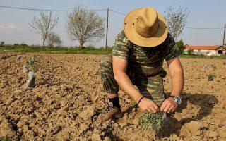 Και για τους αγρότες, όταν υπάρχει πολλαπλή δραστηριότητα, μηνιαία βάση υπολογισμού αποτελεί το άθροισμα του καθαρού φορολογητέου αποτελέσματος από κάθε δραστηριότητα.