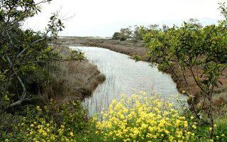 Το όριο του οικοπέδου του βιολογικού καθαρισμού βρίσκεται 67 μέτρα από το όριο του υγροτόπου Σχινιά, ενώ τμήμα των υποδομών (αγωγοί και αντλιοστάσια) θα διέρχεται μέσα από τον υγρότοπο και το Εθνικό Πάρκο Σχινιά.