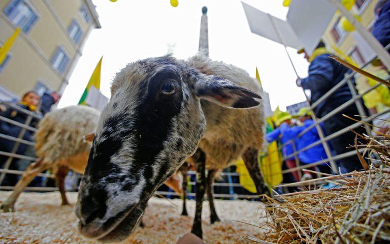 Διαδήλωση με πρόβατα έξω από το ιταλικό κοινοβούλιο