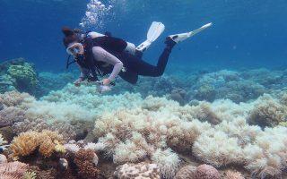 Κινδυνεύει ο Μεγάλος Κοραλλιογενής Υφαλος της Αυστραλίας λόγω κλιματικής αλλαγής, αφού η χλωρίωση έχει καταστρέψει μεγάλα κομμάτια του. Οπως λένε οι επιστήμονες, είναι εντελώς απαραίτητο να δοθεί απόλυτη προτεραιότητα στην επίλυση του προβλήματος της κλιματικής αλλαγής, προκειμένου να καταφέρει να επιβιώσει. Τον ύφαλο καταστρέφουν και οι αστερίες που κατατρώγουν τους ιστούς του. Ωστόσο, οι ειδικοί πιστεύουν ότι θα καταφέρουν να τους απομακρύνουν χρησιμοποιώντας τις ίδιες τους τις φερομόνες.