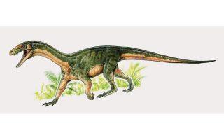 Το σαρκοβόρο ζώο ζούσε πριν από 245 εκατ. χρόνια, περίπου 10 εκατ. χρόνια προτού εμφανιστούν οι πρώτοι δεινόσαυροι.