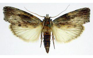 anakalyfthike-entomo-poy-troei-plastiko0