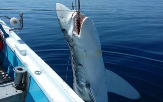 Φωτογραφία: skopelos-news.blogspot.gr