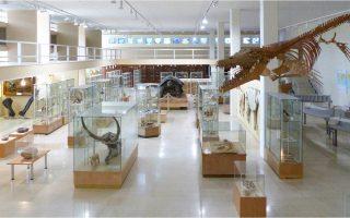 Το Μουσείο Παλαιοντολογίας και Γεωλογίας του Πανεπιστημίου Αθηνών είναι ένα από τα 14 «άγνωστα» εξειδικευμένα μουσεία –επί συνόλου 17– που θα ανοίξουν, με ελεύθερη είσοδο, το Σάββατο 6 Μαΐου. Μεταξύ των 17 ιδρυμάτων, βρίσκει κάποιος το Εγκληματολογικό Μουσείο αλλά και το Μουσείο Ανατομίας, το οποίο μάλιστα διατηρεί την... καρδιά του Αντώνη Σαμαράκη. Σελ. 32