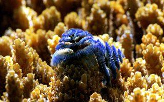 SOS εκπέμπουν τα πανέμορφα κοράλλια της Μεσογείου.