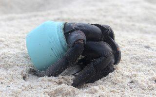 Τα πλαστικά του Henderson Island. Αντιμέτωποι με την θαλάσσια ρύπανση από κομμάτια πλαστικού, βρέθηκαν οι επιστήμονες στην διάρκεια επίσκεψης στο μικρό ακατοίκητο νησάκι του Ειρηνικού Ωκεανού. Σύμφωνα με τους υπολογισμούς τους, τουλάχιστον 38 εκατομμύρια σκουπίδια ξεβράζονται στις ακτές του επηρεάζοντας φυσικά το περιβάλλον. Στην φωτογραφία, ένας κάβουρας του νησιού που προτίμησε(;) για καβούκι του ένα κομμάτι πλαστικό. (Jennifer Lavers via AP)