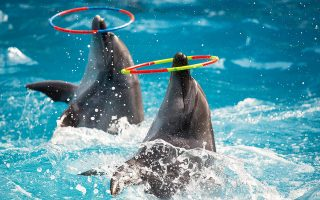 ta-delfinia-den-einai-gia-ta-delfinaria0