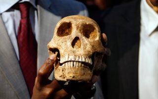 Ομοίωμα κρανίου του Homo naledi παρουσιάζει μέλος της ομάδας του Πανεπιστημίου του Βιτβάτερσραντ.