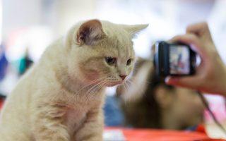 Το 38% των ερωτηθέντων μοιράζεται το σπίτι του με γάτα.