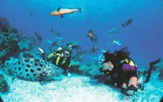 «Κοράλλια και ύφαλοι» ξανά στο Πλανητάριο του Ιδρύματος Ευγενίδου.