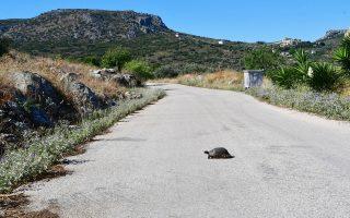 Γκαζώνει η χελώνα για να προλάβει την ποσοτική χαλάρωση. (Πέραν του ότι από τον δρόμο μπορεί να περνάει η ανάπτυξη, που έρχεται με ταχύτητα...)