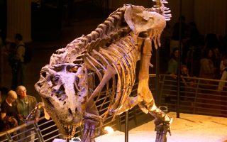 Ενας πελώριος Τ- Ρεξ που ακούει στο όνομα Σου εκτίθεται σε μουσείο του Σικάγου. Τα ζώα αυτά φαίνεται ότι είχαν φολίδες και όχι φτέρωμα ή χνούδι.