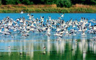 Στον υγρότοπο της Σάνης, που φιλοξενεί 214 είδη άγριων πουλιών, διοργανώνονται οικοπεριηγήσεις από το Sani Resort.