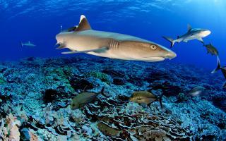 i-desmeysi-tis-blancpain-gia-tin-prostasia-ton-okeanon0