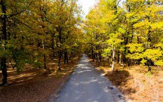 Στο στόχαστρο του Συνηγόρου βρίσκονται νομοθετικές τροποποιήσεις, με σκοπό την επίσπευση της διαδικασίας κύρωσης των δασικών χαρτών.