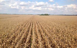 Στην περιοχή Καστίγια ι Λεόν, που είναι η πλουσιότερη σε σιτηρά σε ολόκληρη την Ισπανία, οι απώλειες στη σοδειά εκτιμώνται στο 60%-70%.