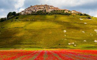 Η ξηρασία στην Ιταλία έχει επηρεάσει αρνητικά τις μεγάλες εκτάσεις με παπαρούνες και άλλα άνθη στην κεντρική χώρα.