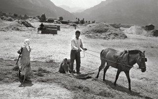 Αλώνισμα. Φωτογραφία του Τάκη Τλούπα, 1952