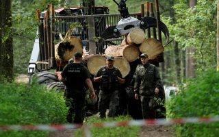Δασοφύλακες κατά τη διάρκεια της διαδικασίας υλοτόμησης στο δάσος Μπιαλοβιέσκα.