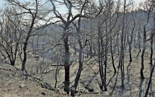 Χιλιάδες στρέμματα πευκοδάσους έγιναν στάχτη. Οι ισχυροί και διαφορετικών διευθύνσεων άνεμοι που έπνεαν στην περιοχή «φούσκωσαν τα πανιά» της πυρκαγιάς προς πολλές κατευθύνσεις.