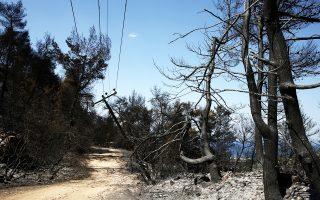 Πεσμένος στύλος της ΔΕΗ σε δάσος στους Αγίους Αποστόλους. Στην Ανατολική Αττική οι φλόγες άφησαν πίσω τους περίπου 18.500 στρέμματα καμένη γη.