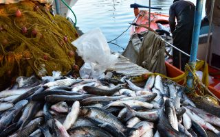 Η εταιρεία θα παρουσιάσει σε παράκτιους αλιείς τρόπους να συμπληρώσουν το εισόδημά τους πιάνοντας λιγότερα ψάρια, όπως με την τουριστική αλιεία, πολύ δημοφιλή στην Ισπανία, αλλά ελάχιστα διαδεδομένη στην Ελλάδα.