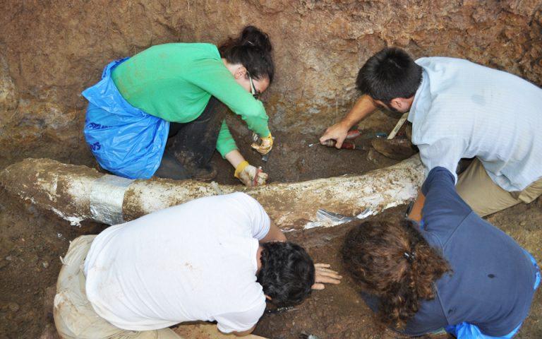moyseio-sti-megalopoli-archaioi-elefantes-gia-ti-amp-8230-vitrina-2206012