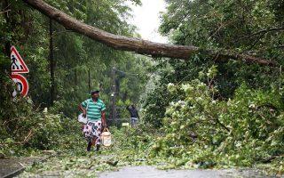 Ανδρας παρατηρεί πεσμένο δέντρο καθώς περπατάει στην πόλη μετά το πέρασμα του τυφώνα «Μαρία» στη Γουαδελούπη.