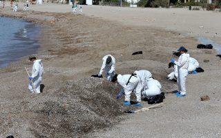 Συνεχίζεται η απορρύπανση στις παραλίες της Αττικής. Πληθώρα σεναρίων διατυπώνονται από τους ειδικούς, σχετικά με τους λόγους πίσω από το ναυάγιο του «Αγ. Ζώνη ΙΙ», από τη δολιοφθορά μέχρι την εσκεμμένη βύθισή του.