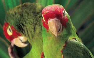 papagalos-ekane-paraggelia-sto-amazon0