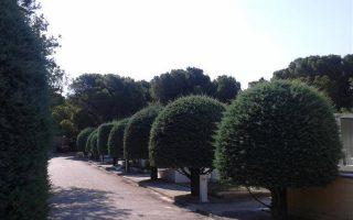 Η ιδιαιτερότητα του ιστορικού Κοιμητηρίου της Κηφισιάς αναγνωρίστηκε και επισήμως από τον πλέον αρμόδιο φορέα, την Ενωση για τα Σημαντικά Κοιμητήρια της Ευρώπης (Association of Significant Cemeteries of Europe - ASCE). Το Κοιμητήριο στα Αλώνια συγκαταλέγεται πλέον στα Σημαντικά Κοιμητήρια της Ευρώπης. Η ASCE λειτουργεί στο πλαίσιο του Συμβουλίου της Ευρώπης και στους κόλπους της προβάλλονται 179 κοιμητήρια από 22 χώρες.