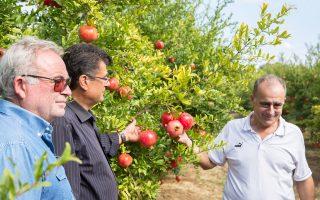 Δυόμισι τόνοι ροδιού συνθλίβονται σε μία βάρδια στο εργοστάσιο «Αλφειός» και σε μία ημέρα εμφιαλώνονται 12.000 μπουκάλια. Παράγονται 800 τόνοι φρούτου και διακινούνται στην ελληνική αγορά 230.000 μπουκάλια χυμού.