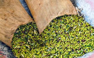 Η επιτραπέζια ελιά περιέχει όλες τις αντιοξειδωτικές ουσίες που ενδέχεται να έχει χάσει ένα ελαιόλαδο.