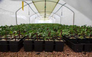 dorea-mastichodendron-apo-tin-alpha-bank-pros-toys-pligentes-mastichoparagogoys-tis-chioy