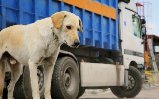 Σκηνή από το ντοκιμαντέρ «Greek Animal Rescue» του Μενέλαου Καραμαγγιώλη.