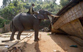 Σε ρόλο μπουλντόζας. Στο καταφύγιο άγριας ζωής Amchang στην επαρχία Assam της Ινδίας αποφάσισαν να χτίσουν τις καλύβες τους ακτήμονες. Οι αρχές επιστράτευσαν ελέφαντες για να κατεδαφίσουν τις καλύβες σε μια επίδειξη ισχύος απέναντι στους καταπατητές, οι οποίοι απάντησαν με πετροπόλεμο. AP Photo/Anupam Nath