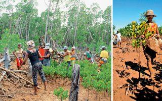 Οι άνεργοι ντόπιοι βρίσκουν δουλειά φυτεύοντας και φροντίζοντας τα δέντρα σε μια αποψιλωμένη περιοχή στην Αφρική.