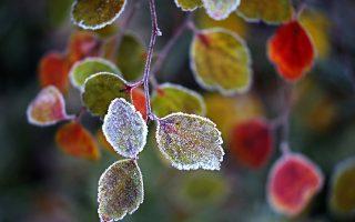 Παγωνιά. Αρκετά βουνά της Βόρειας Ευρώπης φιλοξενούν τα πρώτα χιόνια τους και πόλεις όπως η Μόσχα γεύονται στα φύλλα των δένδρων της και όχι μόνο, τις πρώτες παγωνιές. EPA/YURI KOCHETKOV