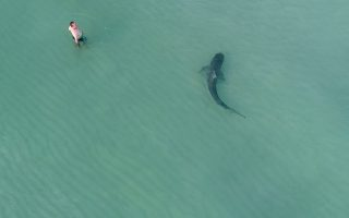 Ανατριχίλα. Το στιγμιότυπο καταγράφηκε από drone και προκάλεσε τρόμο στο Ιντερνετ όπου προβλήθηκε. Ανάμεσα στους ανθρώπους που κολυμπούσαν σε παραλία βρέθηκε και ένας μεγάλος καρχαρίας- τίγρης. Ευτυχώς από το επεισόδιο στο Miami Beach κανείς δεν τραυματίστηκε αν και είναι σίγουρο ότι ο κύριος της φωτογραφίας που τόση ώρα κοιτούσε το drone, όταν είδε τα πλάνα θα του ήρθε μια σκοτοδίνη.  @AERODRONEMEDIA/via REUTERS