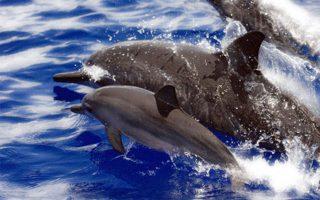 prostimo-kai-eisaggeleas-gia-tis-epideixeis-delfinion-stin-attiki0