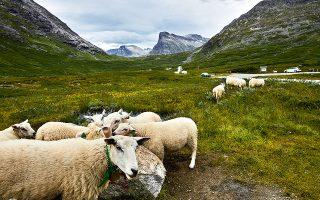 Εικόνες της αγροτικής Νορβηγίας κοντά στο Trollstigen. (Φωτογραφία: David B. Torch/The New York Times)