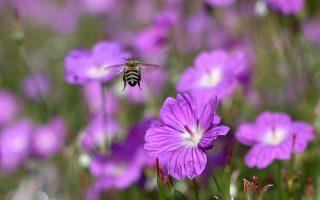Τα έντομα παρουσιάζουν σημαντική μείωση των πληθυσμών τους, όπως απέδειξε η έρευνα σε 63 καταφύγια άγριας ζωής.