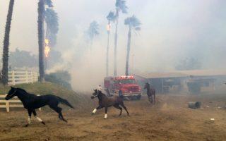 Τρομοκρατημένα άλογα τρέχουν να σωθούν από τη φωτιά που σάρωσε εγκαταστάσεις εκπαίδευσης αλόγων στο Σαν Ντιέγκο.
