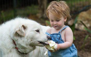 Ποια μικρόβια; Κατακαλόκαιρο και ζέστη πολύ στην Αυστραλία. Ο μόλις 14 μηνών Hudson Walsh δροσίζεται με ένα παγωτό που δεν διστάζει να το μοιραστεί με τον σκύλο του σπιτιού τον Sammy και μετά να συνεχίζει να το τρώει.  EPA/BEN MACMAHON