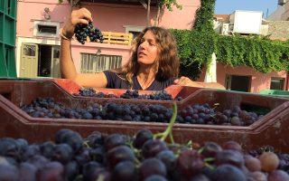 «Ο κόσμος ζητάει φυσικά κρασιά, με τυπικότητα και όσο το δυνατόν λιγότερες παρεμβάσεις. Στην Ελλάδα, έχουμε σπουδαίες γηγενείς ποικιλίες. Γιατί να μη διαφυλάξουμε τη μοναδικότητά τους;» Με αυτό το σκεπτικό και με πάθος για το αντικείμενό της, η 24χρονη οινολόγος Ηλιάνα Μαλίχιν κατάφερε να απομονώσει φυσικές ζύμες για την οινοποίηση του Βιδιανού, ενώ τα οινοποιεία στη συντριπτική πλειονότητά τους χρησιμοποιούν εισαγόμενες.